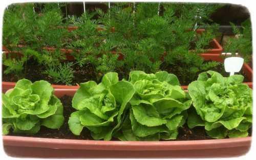 травы от простуды: особенности применения лекарственных растений